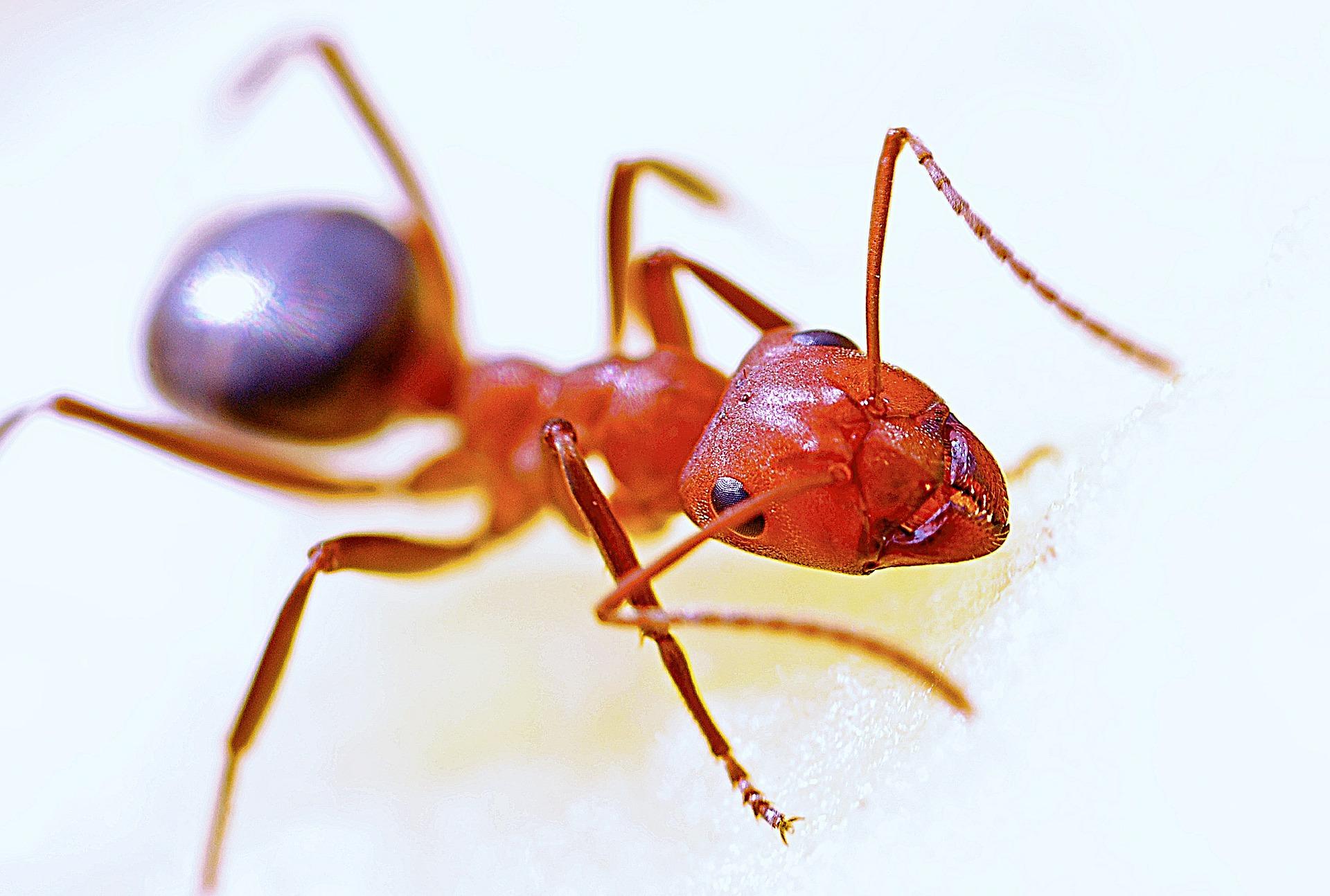 CRONISTAS ÓMICRON: Hormigas
